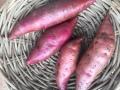 熊本の大地より、無農薬栽培のさつまいも <シルクスイート> (1キロ)