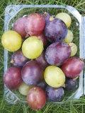 贈りやすい、食べやすい、もちがいい●葡萄の小箱