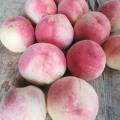 減農薬、無施肥、完熟収穫★送れない桃(2キロ・引き取り限定)