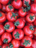 【9月から発送します】大評判! 西さんのプチトマト(1キロ)