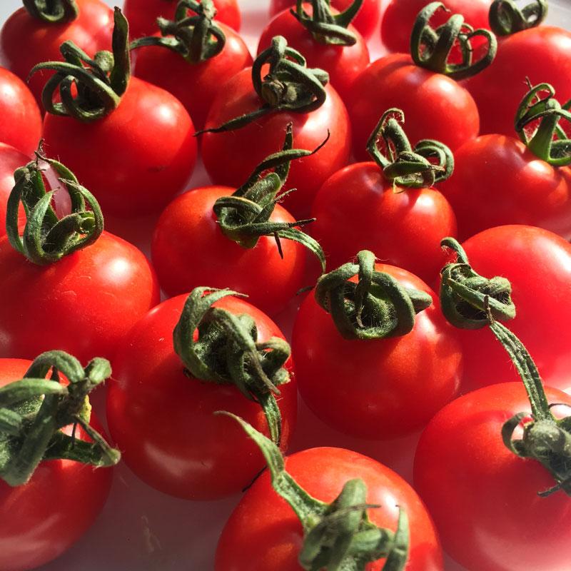【美味しさで人気のロングセラー】 西さんのプチトマト(1キロ)