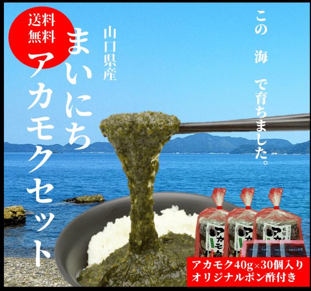 ☆【送料無料】 長州赤もく 40g×30袋 【専用ポン酢つき】