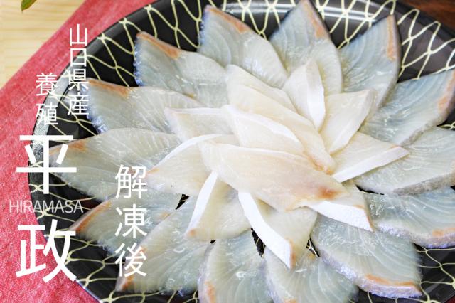 山口県産 魚 鮮魚 刺身 ギフト お中元