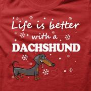 Dachshund _BRed