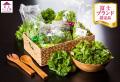 富士ベジ工房5種のレタス食べくらべセット