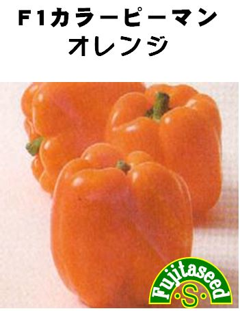 F1カラーピーマンオレンジ