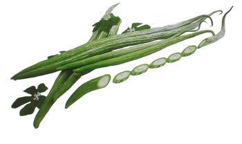 へびうり グリーンナイル