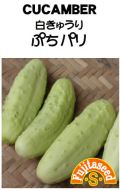 白きゅうり ぷちパリ