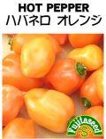 ハバネロ オレンジ