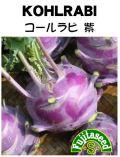 コールラビ 紫