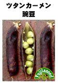 ツタンカーメン豌豆