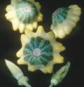UFOズッキーニ グリーンスター(緑と黄)