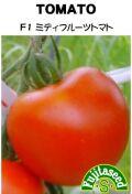 F1ミディフルーツトマト