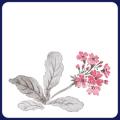 フジ紙コースター 桜草 2色