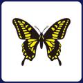 フジ紙コースター 黄蝶角