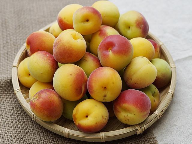 梅干し,梅酒用の黄色く熟した朝摘み完熟南高梅(生梅)小粒(2Lサイズ)B品(キズ、シミあり)1kg【冷蔵配送】