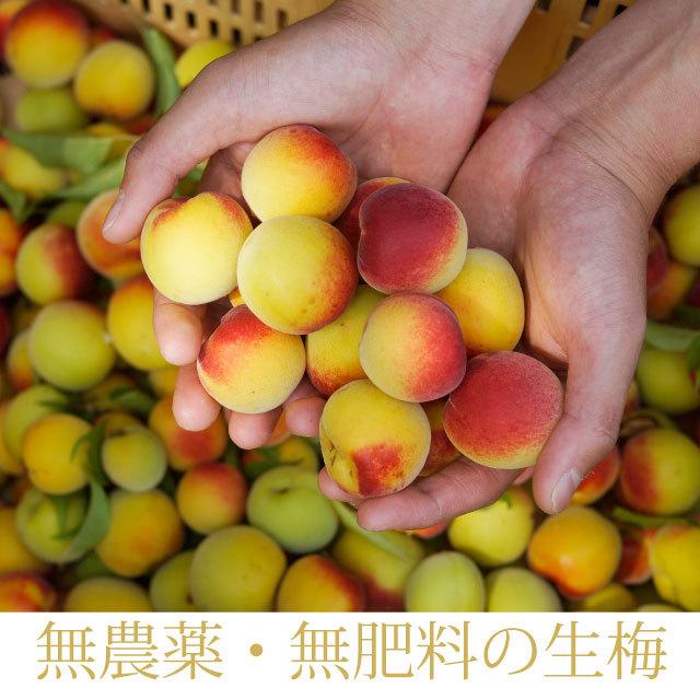 和歌山県産の無農薬南高生梅(完熟梅)、梅酒・梅干し専用 1kg 【冷蔵便】