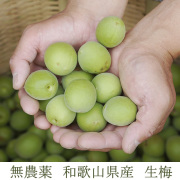産地直送 和歌山県産 無農薬生梅(青梅),梅酒・梅シロップ用 1kg【冷蔵便】