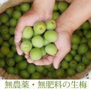 和歌山県産の無農薬南高生梅(青梅)、梅酒・梅シロップ専用 1kg【冷蔵便】