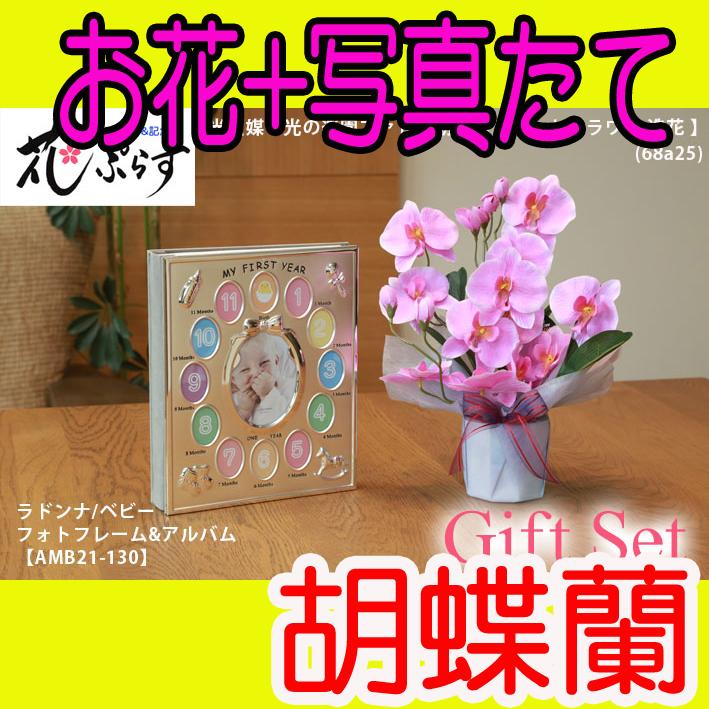 《出産祝い》花ぷらす《ベビーフォトフレーム&アルバム》ファレノ胡蝶蘭68a25-amb21-130ギフトセット