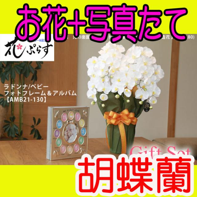 《出産祝い》花ぷらす《ベビーフォトフレーム&アルバム》エレガント胡蝶蘭452A80-amb21-130ギフトセット