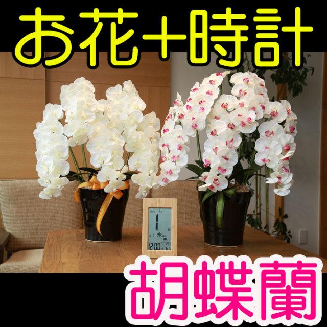 《還暦祝い》花ぷらす《竹の日めくり電波時計》プレミアム胡蝶蘭5本立て651-3a180-T-8656ギフトセット(電波時計名入れ彫刻)