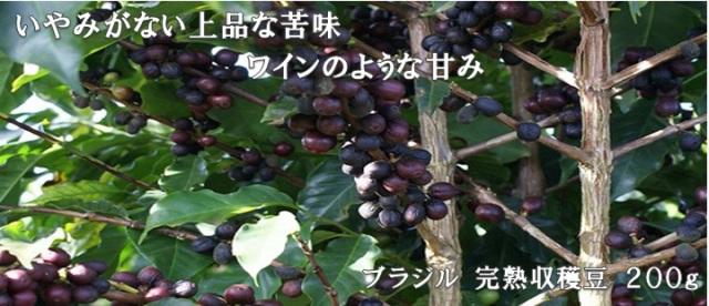 【上品な苦味!】ブラジル 完熟収穫豆200g