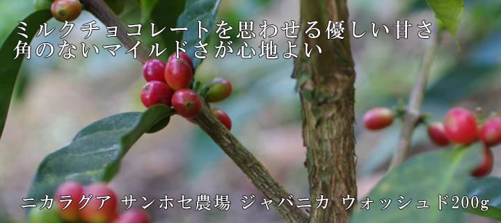 【優しい甘み】ニカラグア サンホセ農園 ジャバニカ ウォッシュド200g