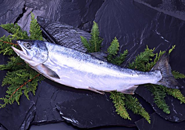 新巻鮭オス(3kg前後)1本