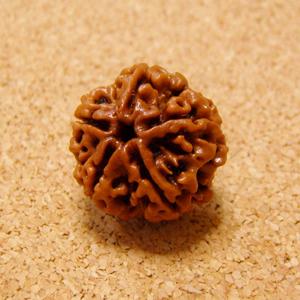 [10個セット]インド菩提樹ルドラクシャ・ビーズ(5面・オイル加工・18-21mm)