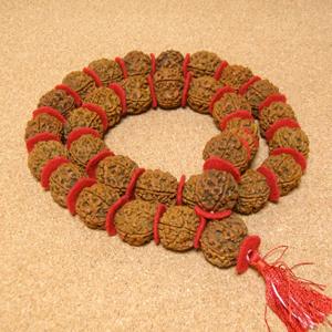 インド菩提樹ルドラクシャ数珠カンタ/スペーサー仕立て(5面・22-23mm)