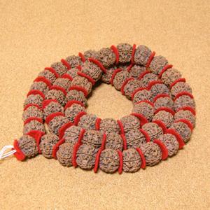 [大玉54粒+親玉1粒/希少レア]インド菩提樹ルドラクシャカンタ(5面・23mm)