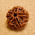 [超特大サイズ:1粒売り]インド菩提樹ルドラクシャ・ビーズのオイル加工(5面/24-25mm)