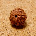 [20個入]インド菩提樹ルドラクシャビーズ/ナチュラルカラー(5面・9mm・開通穴あり)