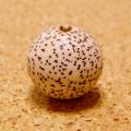 [特大:20個セット]主玉:無漂白の星月菩提樹14.5-15mm
