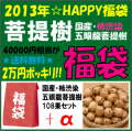 [2013年☆福袋]天然柿渋染/国産/五眼龍菩提樹108果セット+αの詰め合わせ