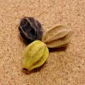 [50個セット/3色混合]天然草木染めの栴檀・センダンの実のばら売り(胡桃/ウコン/玉葱)