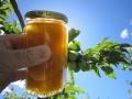 ■通販限定 完熟南高梅 まりも梅  紀州健康梅を原料とした