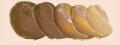ホルベイン油絵具 ゴールド オーカー