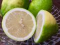 瀬戸田産レモン 3k 超おススメ! ◆ノーワックス、防カビ剤不使用、皮まで食べれる安心レモン