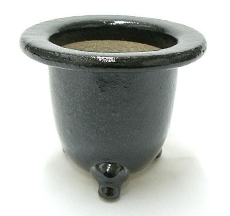 京楽焼 羽蝶蘭鉢 3.5号 ウチョウラン