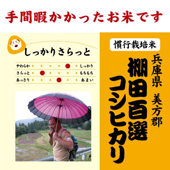 棚田コシヒカリ