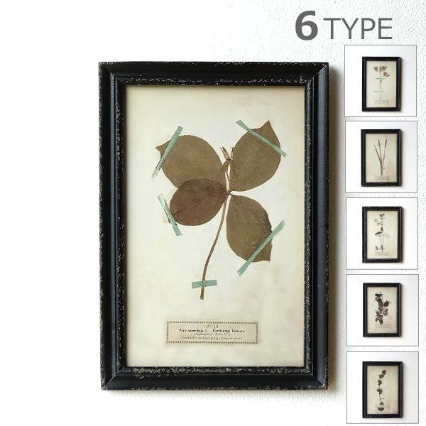 アートパネル 植物 おしゃれ アートフレーム ウォールアート ウォールデコ 自然 壁掛け インテリア レトロ アンティークな押し花プリントのフレーム 6タイプ [dcr8485]