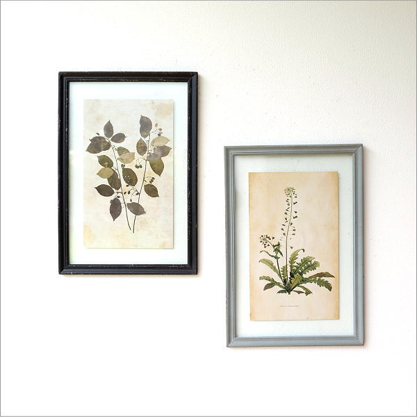 アンティークな植物画フレームB 2タイプ [peo1820]
