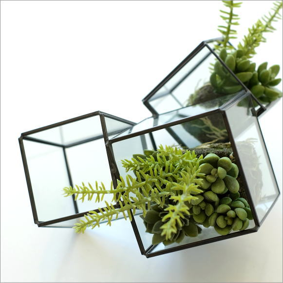 ガラスのテラリウム 3ブロック