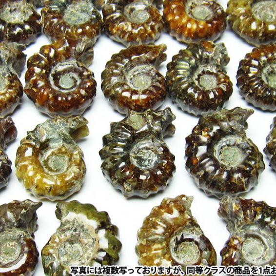アンモナイト化石[M407-1]