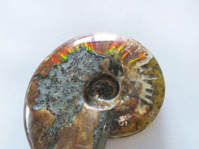虹入りアンモナイト化石