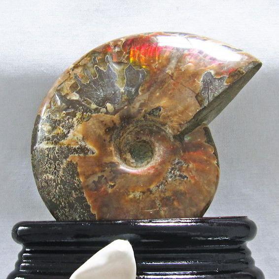 虹入りアンモナイト化石[T570-3727]