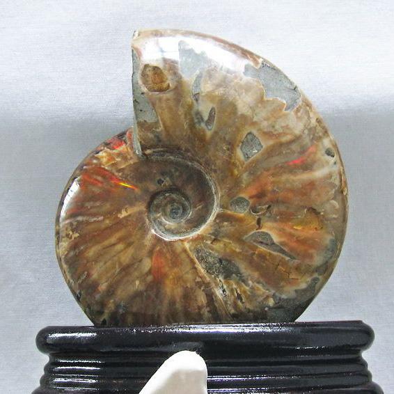 虹入りアンモナイト化石[T570-3744]
