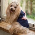 犬服ブランド「グラマーイズム」 シンディー